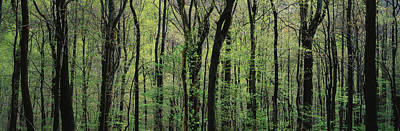 Trees Great Smoky Mountains National Art Print by Panoramic Images