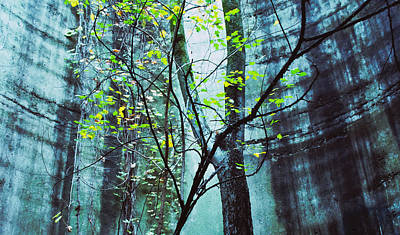 Photograph - Trees Growing In Silo - Blu-green Filter Wide Edition by Tony Grider