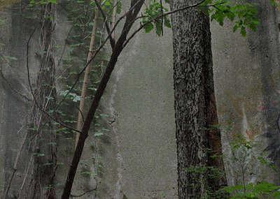 Photograph - Trees Growing In Silo Gray Edition by Tony Grider