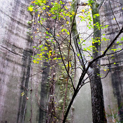 Photograph - Trees Growing In Silo - Natural Square Edition by Tony Grider