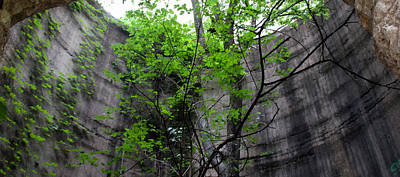 Photograph - Trees Growing In Silo - Panorama Edition by Tony Grider