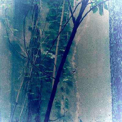 Photograph - Trees Growing In Silo Abstract- Square 2015 Edition by Tony Grider