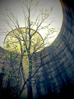 Photograph - Trees Growing In Silo - Yellow Blue Portrait Edition by Tony Grider