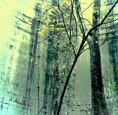 Photograph - Trees Growing In Silo  Yellow Green Square Edition by Tony Grider