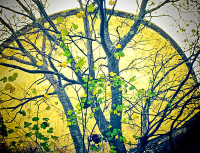 Photograph - Trees Growing In Silo  - Large Yellow Edition by Tony Grider
