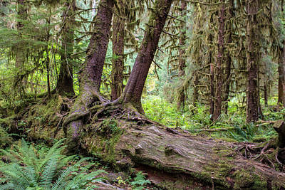 Photograph - Trees Growing On Trees by Jeff Pfaller