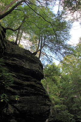 Photograph - Trees Hanging Over Cliff by Angela Murdock