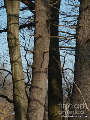 Folkartanna Photograph - Trees I Love 21 by Anna Folkartanna Maciejewska-Dyba
