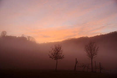 Wall Art - Photograph - Trees In A Foggy Sunset by Andrea Gabrieli