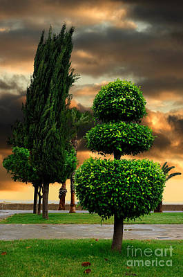 Funny Tree Shapes Photograph - Trees In A Park Of Limassol City Sea Front In Cyprus by Oleksiy Maksymenko