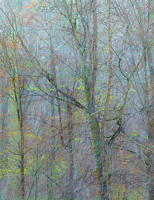 Snowstorm Photograph - Trees In A Snowstorm by Joseph Smith
