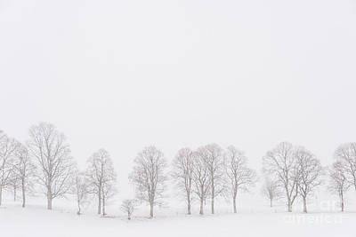 Photograph - Trees In A White Landscape In A Blizzard by IPics Photography