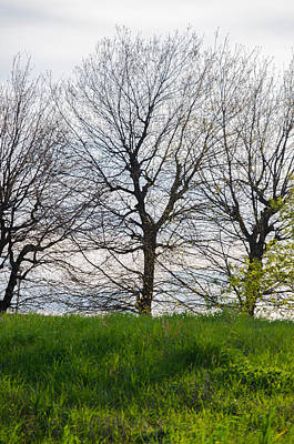 Trees In April - 2  Art Print by Andrea Mazzocchetti