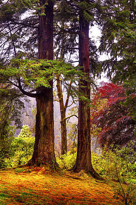 Photograph - Trees In Autumn Glory. Scotland by Jenny Rainbow