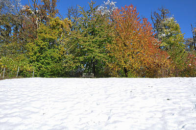 Photograph - Trees In Autumn Leaves Snow Covered Meadow by Martin Stankewitz