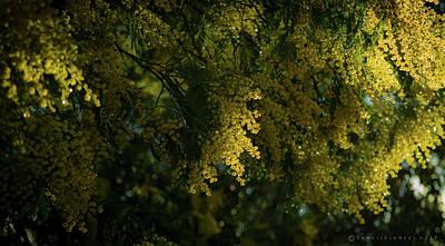 Photograph - Trees In Bilbao Spain by Henri Irizarri