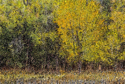 Photograph - Trees In Fall With Texture by John Brink