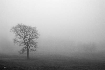 Photograph - Trees In Fog by Dana Sohr