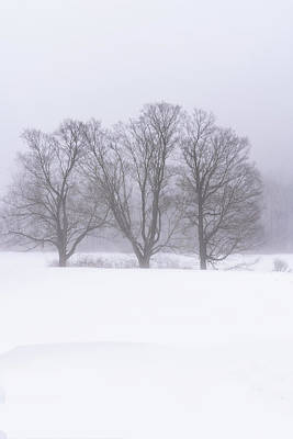 Photograph - Trees In Fog by Tom Singleton