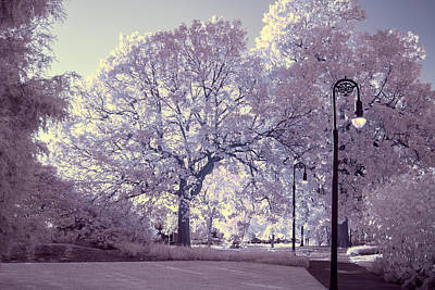 Photograph - Trees In Ir by Charles Hite