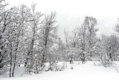 Photograph - Trees In Lofoten's Winter by Dubi Roman