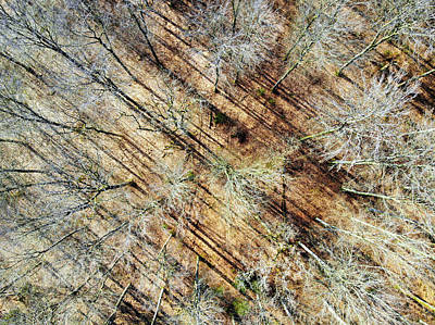 Photograph - Trees In March Aerial Drone Photography by Matthias Hauser