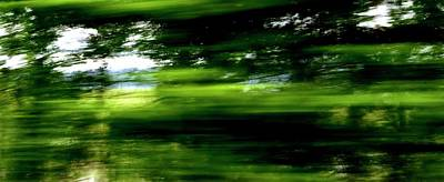 Photograph - Trees In Motion by Jerry Sodorff