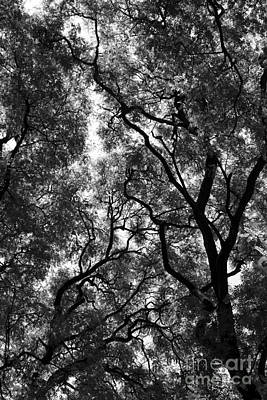 Photograph - Trees In Park by Balanced Art