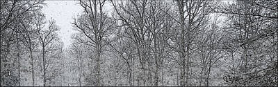Photograph - Trees In Snow by Amazing Photographs AKA Christian Wilson
