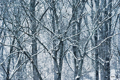 Photograph - Trees In Snow - Patapsco Valley by Dana Sohr