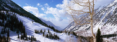 Bare Trees Photograph - Trees In Snow, Snowbird Ski Resort by Panoramic Images