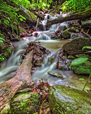 Photograph - Trees In Stream by Alan Raasch