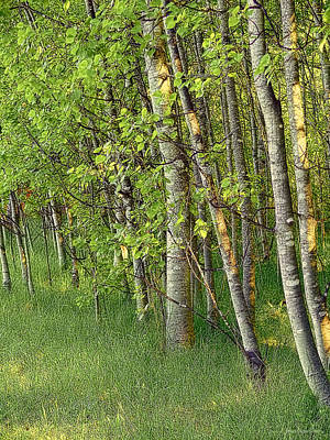 Photograph - Trees In Summer by Jennie Marie Schell