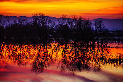Photograph - Trees In Sunset Reflection by Garry Gay