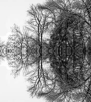 Photograph - Mystical Mirror Tree Of Hydra by John Williams