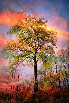 Photograph - Trees In The Brilliance Of Evening by Debra and Dave Vanderlaan