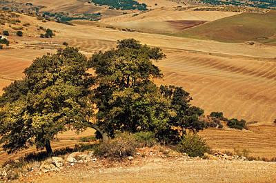 Photograph - Trees In The Fields. Andalusia by Jenny Rainbow