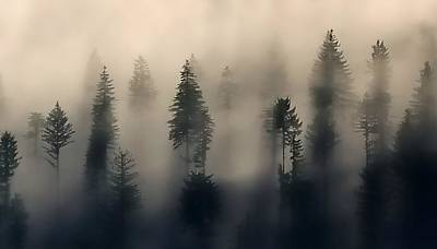 Jerry Sodorff Royalty-Free and Rights-Managed Images - Trees In The Fog by Jerry Sodorff