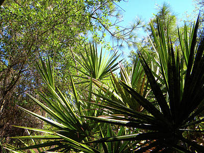 Southwest Florida Photograph - Trees In The Forest by Ric Schafer