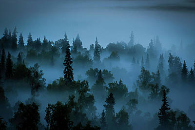 Photograph - Trees In The Mist by Benjamin Dahl