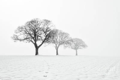 Trees In Snow Photograph - Trees In The Mist by Janet Burdon