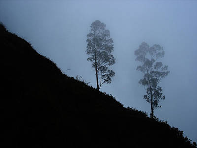 Photograph - Trees In The Mist Near Coonoor by Iqbal Misentropy