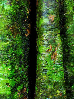 Photograph - Trees In The Rainforest - Mossman Gorge, Australia by Lexa Harpell