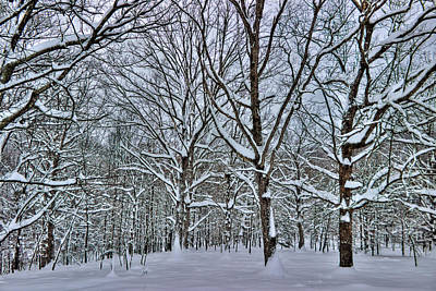Photograph - Trees In The Snow by Jonny D