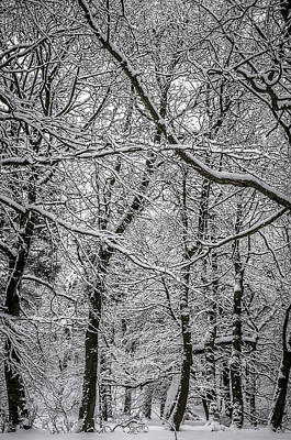 Photograph - Trees In The Snow, Peak District by Neil Alexander