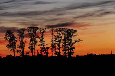 Photograph - Trees In The Sunset by Bill Jordan