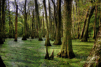 Trees In The Swamp Art Print by Larry Braun