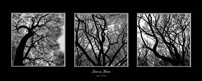 Photograph - Trees In Threes by Diane C Nicholson
