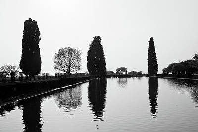 Royalty Free Images Photograph - trees in Villa Adriana by Luigi Orru
