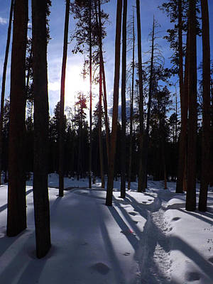 Photograph - Trees In Winter by C Sitton